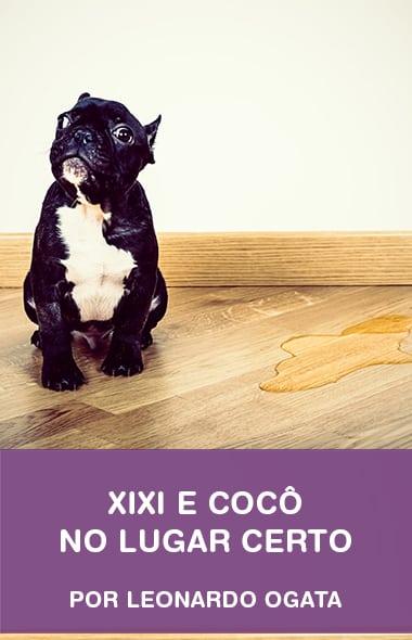 Como ensinar o seu cão a fazer xixi e cocô no lugar certo