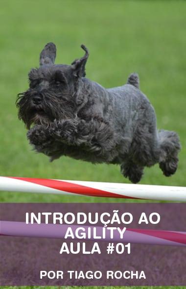 Introdução ao Agility - Aula #01 por Tiago Rocha