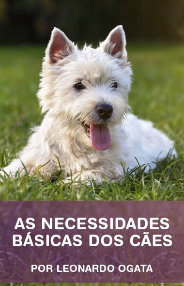 As reais necessidades dos cães