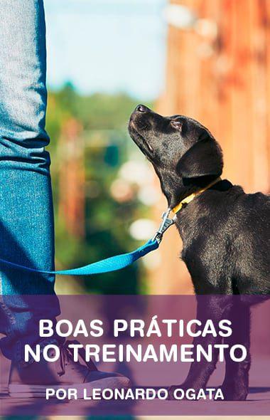 Boas práticas no treinamento de cães