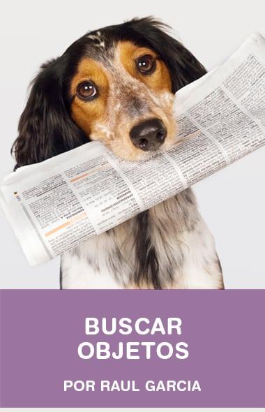 Como ensinar o seu cão a buscar objetos (técnica do bastão) - Raul Garcia