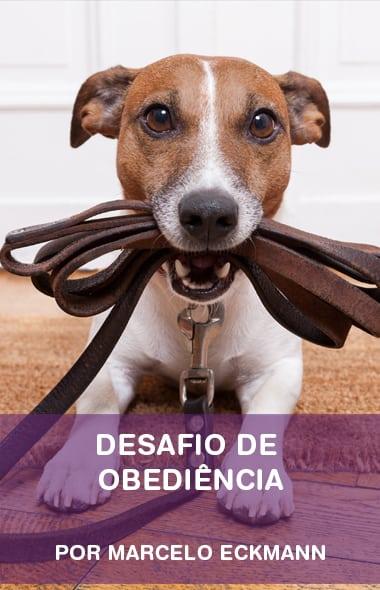 Desafio Tudo de Cão Transforma em 28 dias