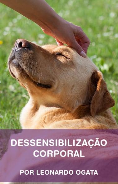 Dessensibilização corporal - como fazer o seu cão amar ser tocado