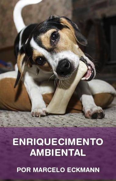 Enriquecimento ambiental - O Smartphone do seu cachorro