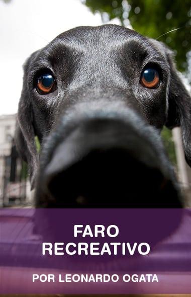 Faro - Saiba como usar o focinho do seu cão de um jeito divertido