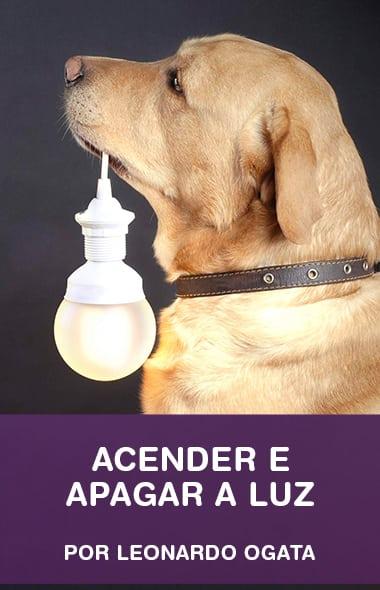 Como ensinar o seu cão a acender e apagar a luz
