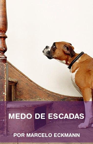 Medo de escadas, o que fazer?