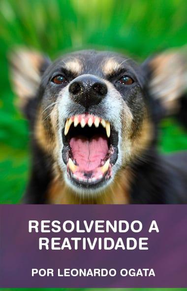 Reatividade com cães