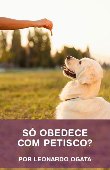 O seu cão só te obedece com petiscos? - Saiba o que fazer