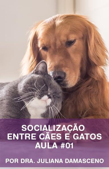 Socialização entre cães e gatos por Dra. Juliana Damasceno