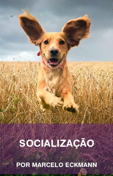 Socialização - O primeiro passo para o sucesso