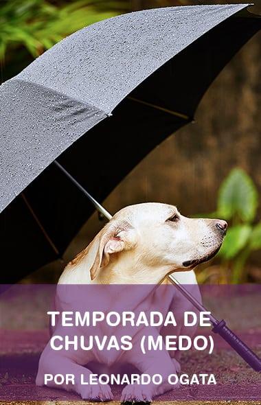 Começou a temporada de chuvas e meu cachorro tem muito medo - E agora?