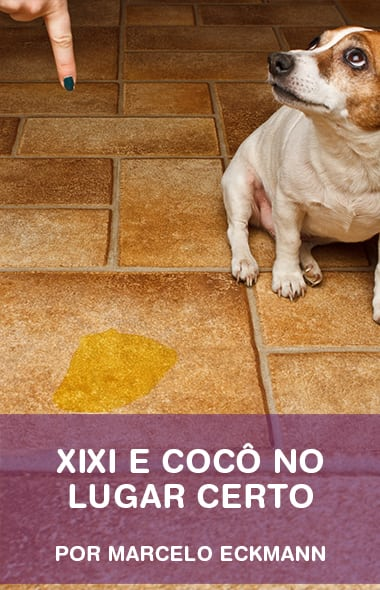 Xixi e cocô no lugar certo - O passo-a-passo para dar certo