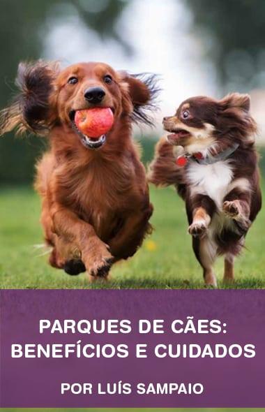 Parque de cães: benefícios e cuidados por Luís Sampaio