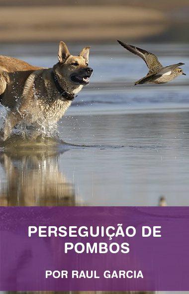 Como ensinar o seu cão a parar de perseguir pombos por Raul Garcia