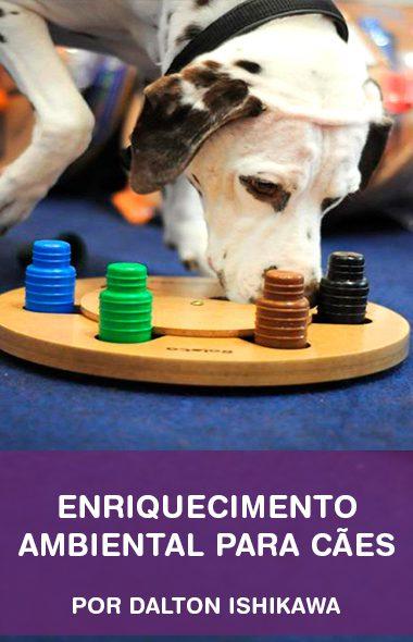 Enriquecimento ambiental para cães por Dalton Ishikawa