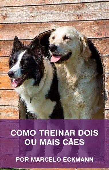 Como treinar dois ou mais cães