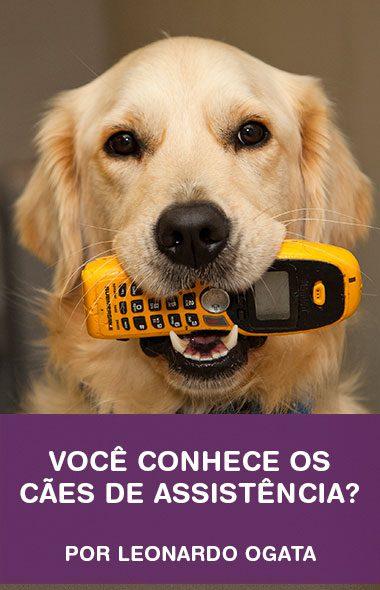 Você conhece os cães de assistência?