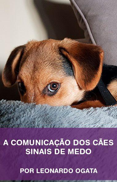 Sinais de medo - A comunicação dos cães