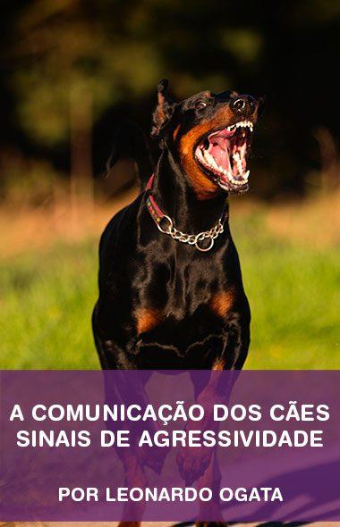 Sinais de agressividade - A comunicação dos cães