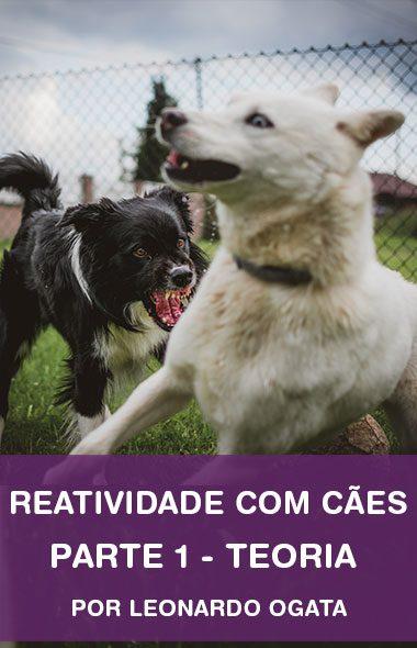 Reatividade com cães - Parte 1
