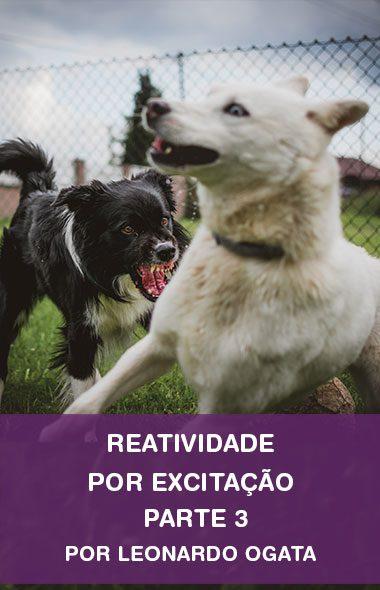 Reatividade com cães - Parte 3