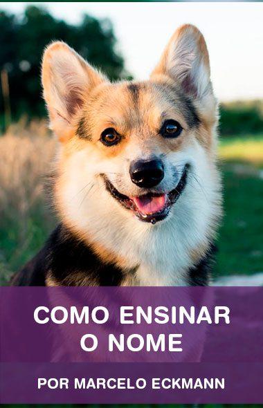 Como ensinar o nome do seu cão