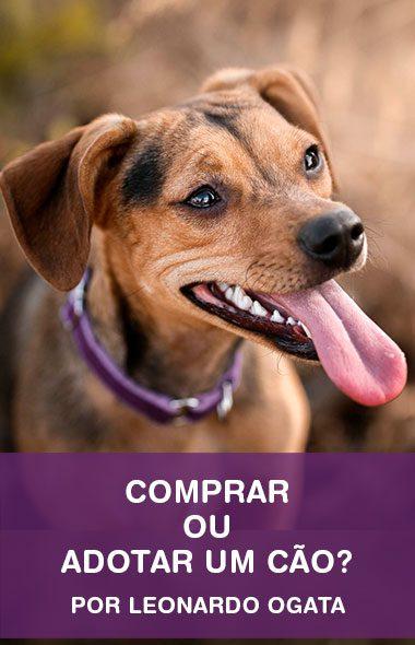 Comprar ou adotar um cãozinho? O que devo fazer?