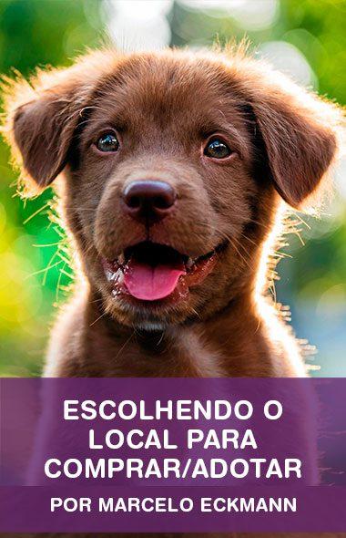 Como escolher o local para comprar ou adotar o seu cão