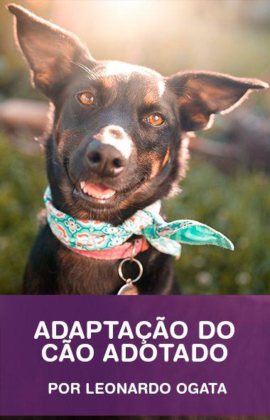 Adaptação do cão adotado na nova casa