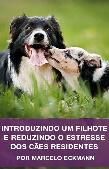 Como introduzir um filhote em casa e reduzir o estresse dos cães residentes