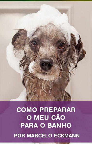 Como preparar o meu cão para o banho