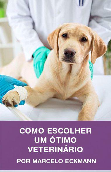 Como escolher um ótimo veterinário