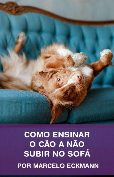 Como ensinar o seu cão a não subir no sofá